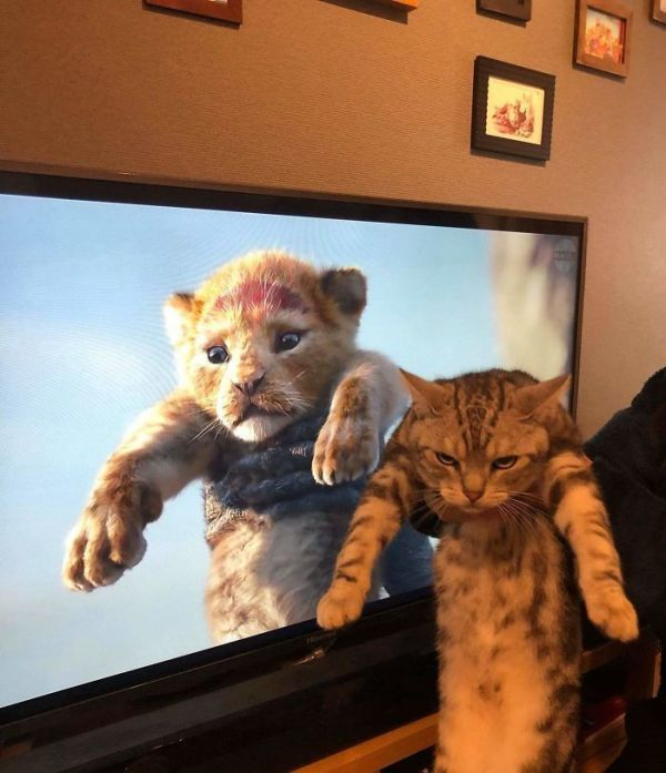 Best Funny Pets 50 Cats That Will Make Even the Grumpiest Person Smile | CutesyPooh 50 Cats That Will Make Even the Grumpiest Person Smile | CutesyPooh 1
