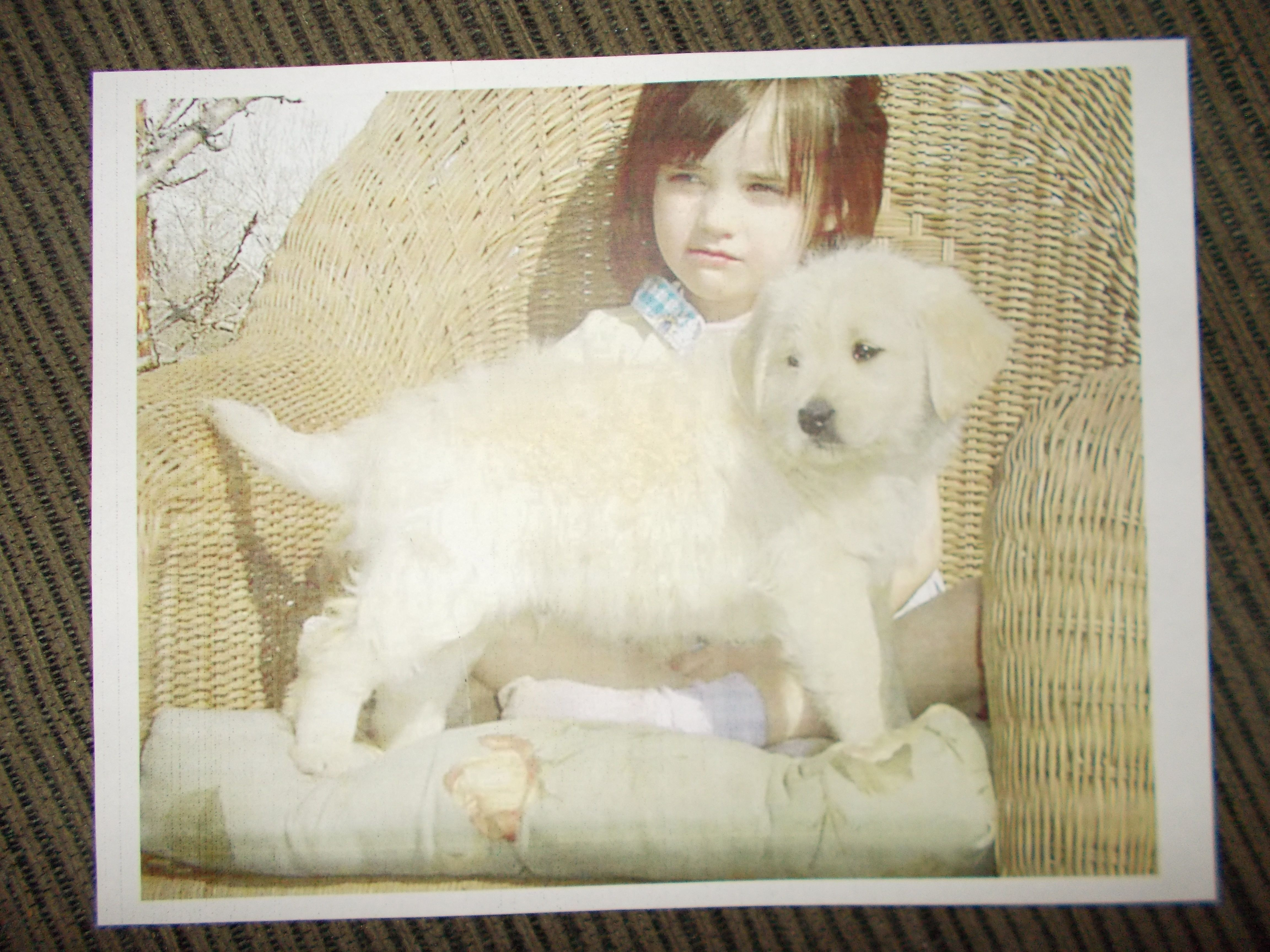 My Cassidy and her firsts Miniature Goldendoodle Puppy.