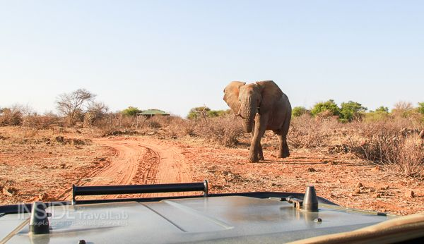 Makanyane Safari Lodge Review
