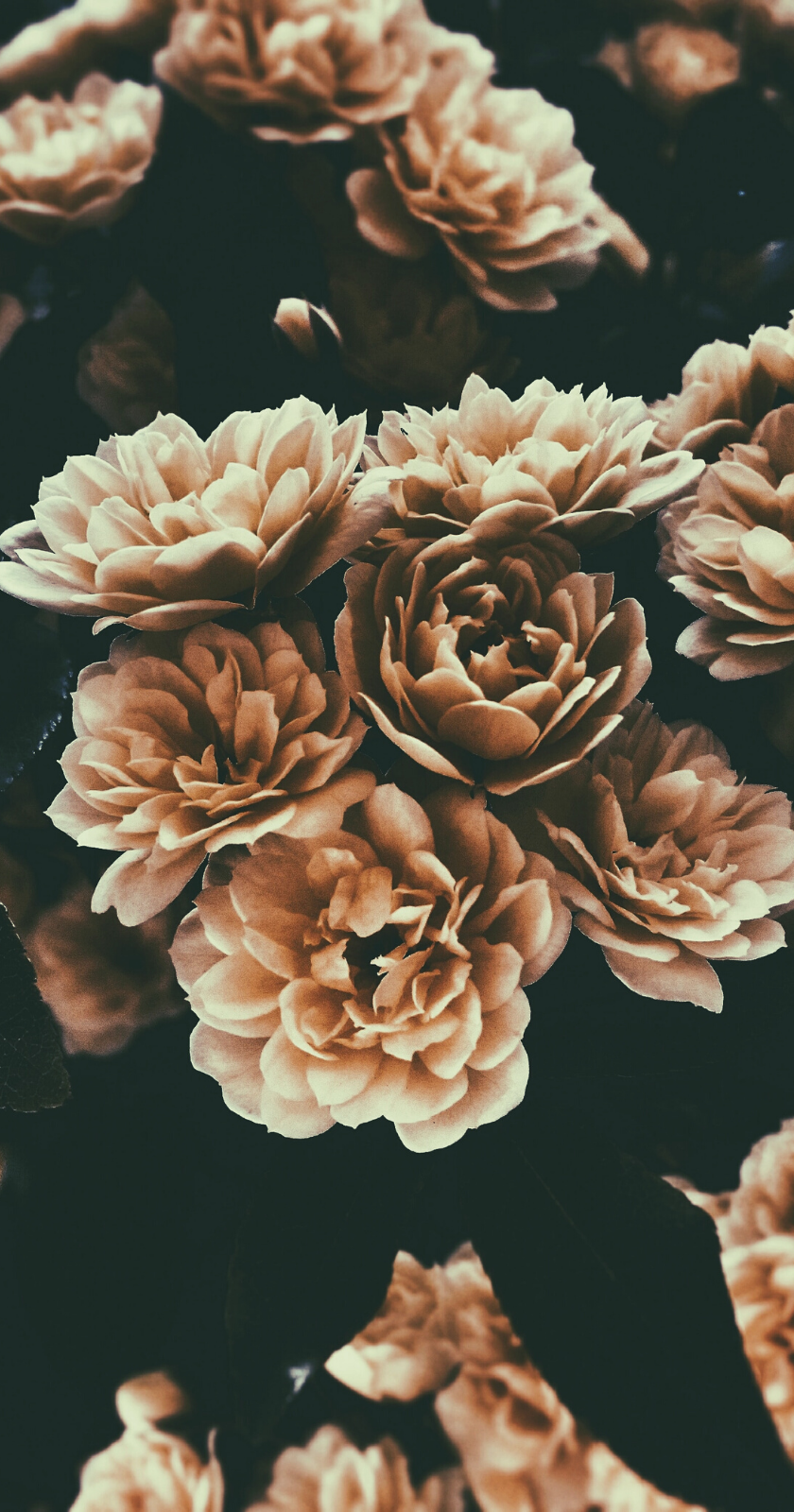 Wallpapers For Iphone In 2020 Floral Tumblr