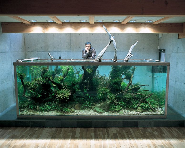 nature aquariums and aquascaping ideas by takashi amano image 06 elegant nature aquarium