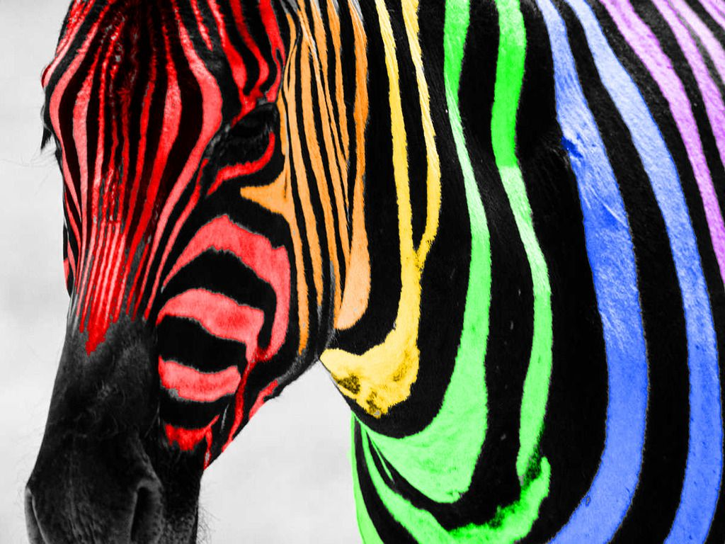 Rainbow colored pictures free rainbow zebra color splash wallpaper download the free rainbow