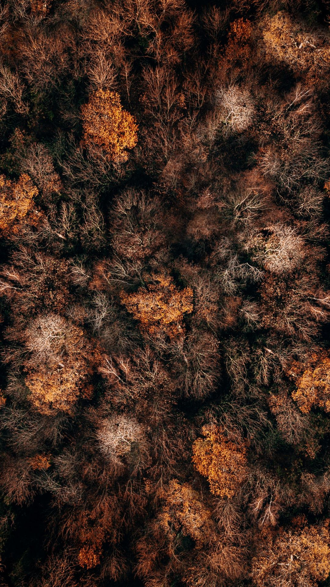Aerial Shot Autumn Nature Trees 1080x1920 Wallpaper Desktop Wallpaper Live Wallpaper Iphone Phone Wallpaper