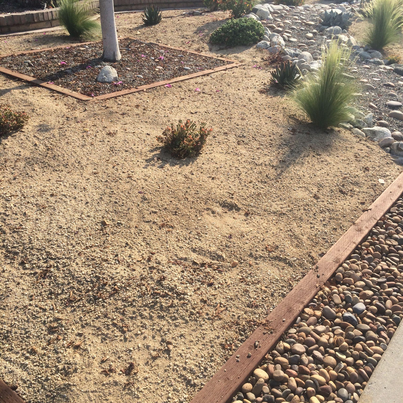 Drought Tolerant Front Yard: Drought Tolerant Front Yard Landscape
