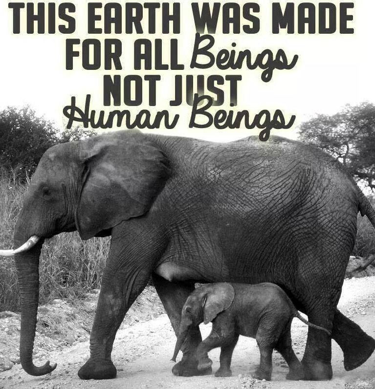 Animal Rights Quotes Pinande Breunig On ❤️special  Pinterest  Animal Cruelty