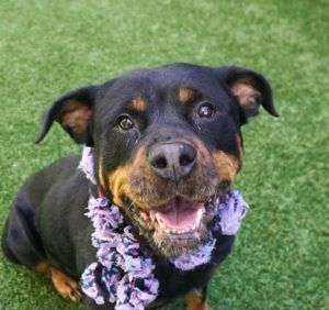 Dedicated To Saving Nyc Shelter Animals Rottweiler Dog Names Cute Puppies Cute Animals