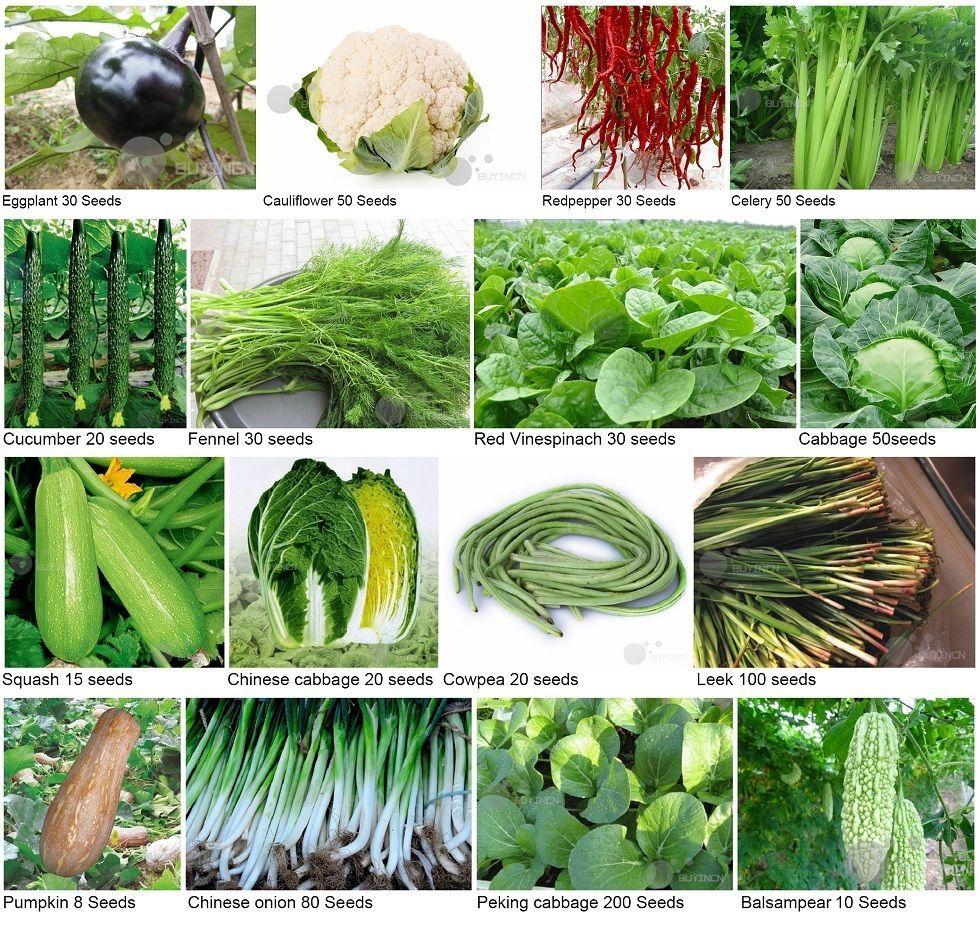 Heirloom Garden Vegetable Seed Non Gmo Seeds Bank Survival Organic