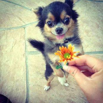 Google+ | Süße hundebilder, Süßeste haustiere, Lustige ...
