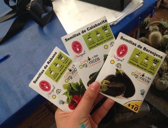 Fuimos y compramos sobres de semillas de calabaza, berenjena y rabano para comenzar a germinarlas!