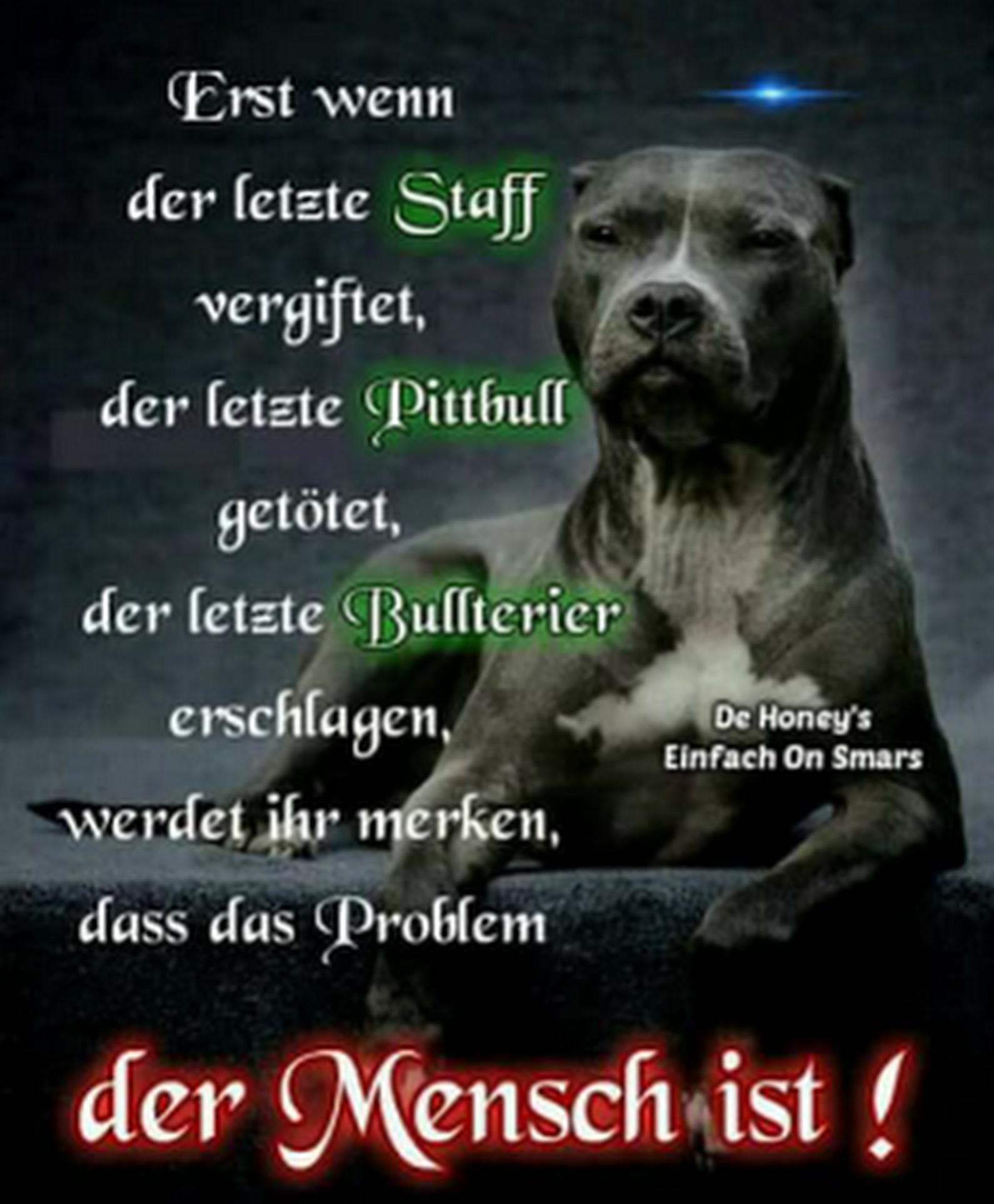 Sign In Hundespruche Zitate Lustig Spruche Tiere