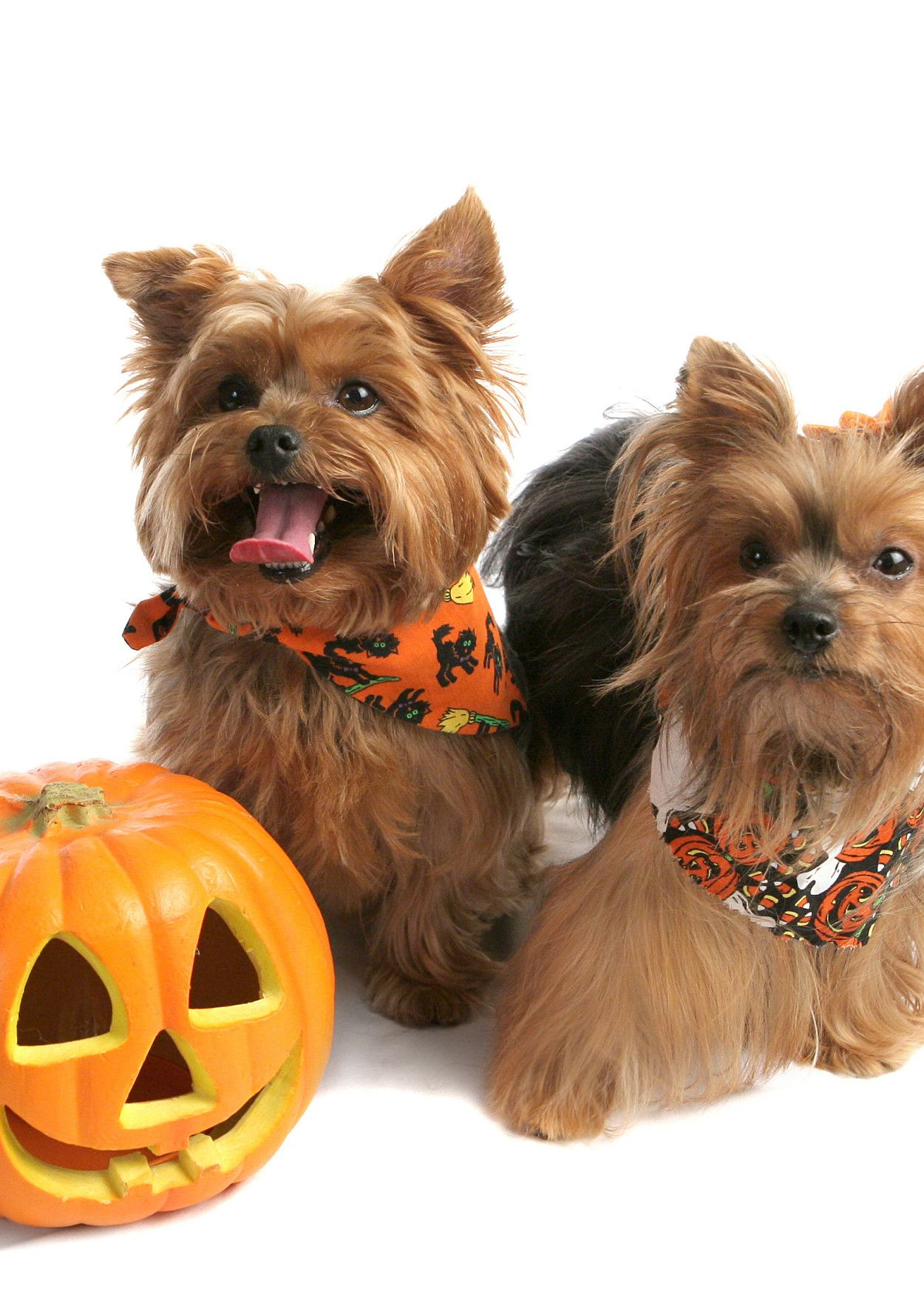 Who Knew? Pumpkin is Good For Dogs Pet halloween