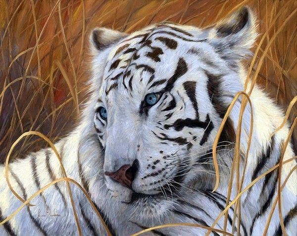 Lucie Bilodeau Art Peinture Tigre Peinture Chat Et Tigre Blanc Royal