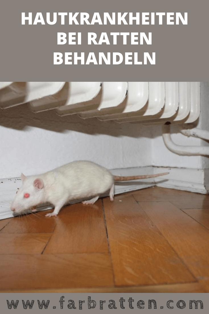 Hautkrankheiten Bei Ratten Erkennen Und Behandeln Farbratten