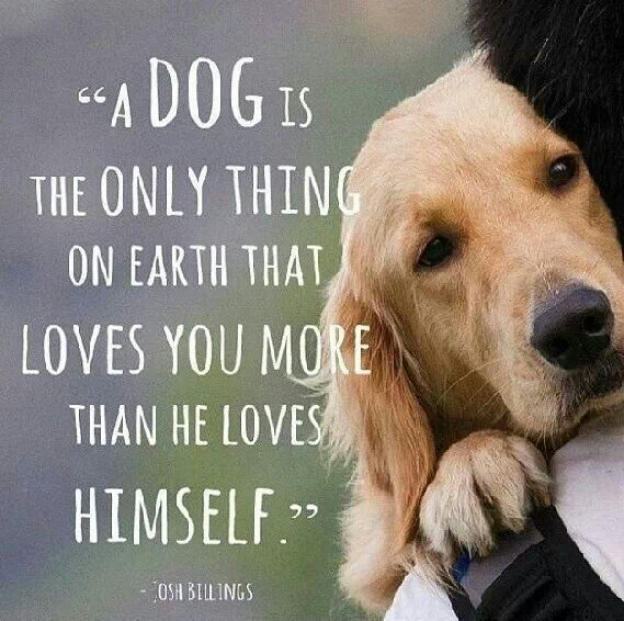A dog is the only thing that loves you more than it loves itself <3