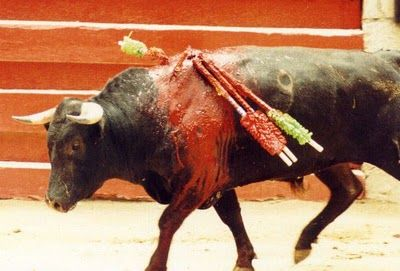 "This is A Barbaric and Cruel ""SPORT""    Tourists, please don't attend these events."
