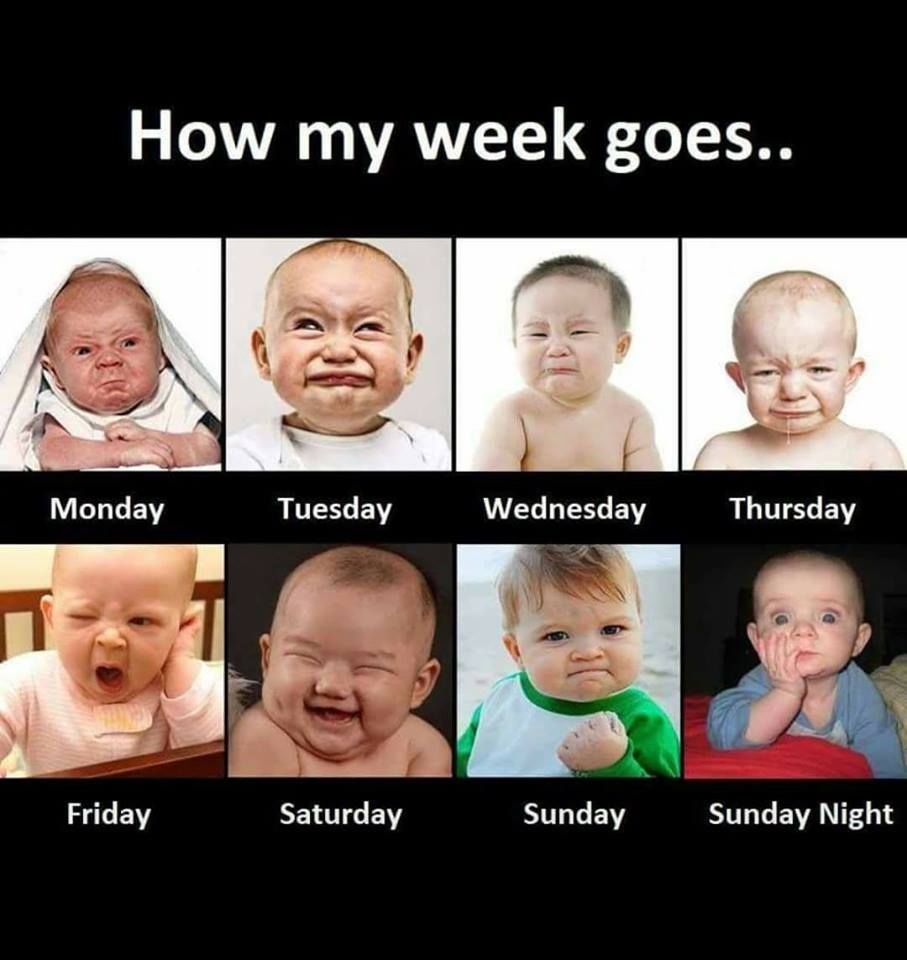 How My Week Goes Quotes Quote Days Friday Monday Week Sunday Wednesday Thursday Saturday Tuesday Funny Images Laughter Really Funny Memes Funny Baby Quotes