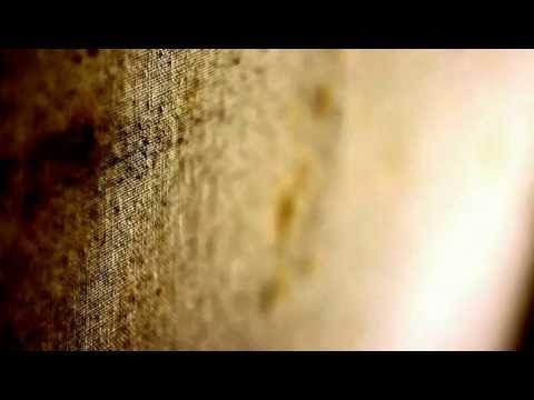 UY1205 Muffa // Mould