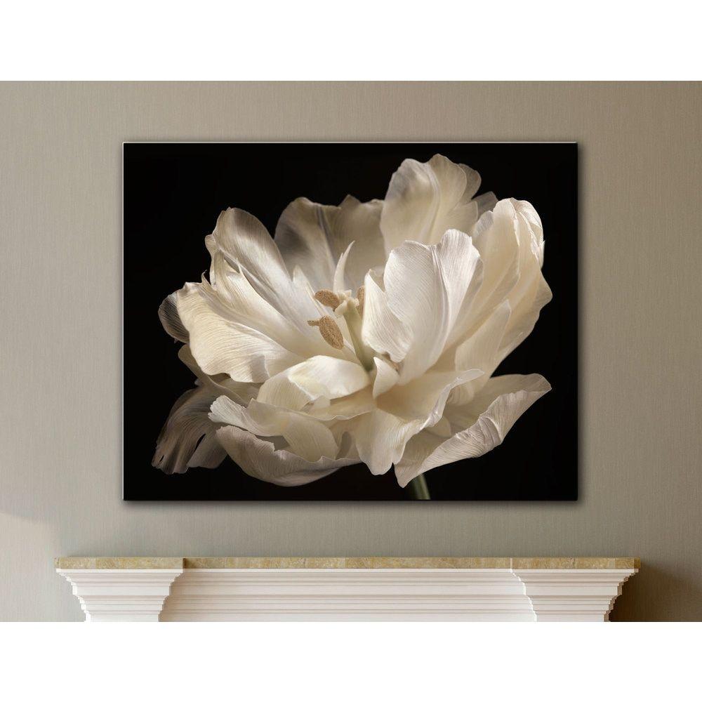 ArtWall Cora Niele\'s White Tulip Gallery Wrapped Canvas | art ...