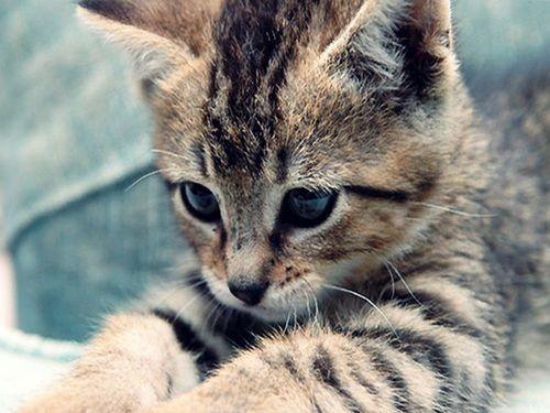 gatos tiernos Nuevos Wallpapers HD , Taringa! on we heart it .