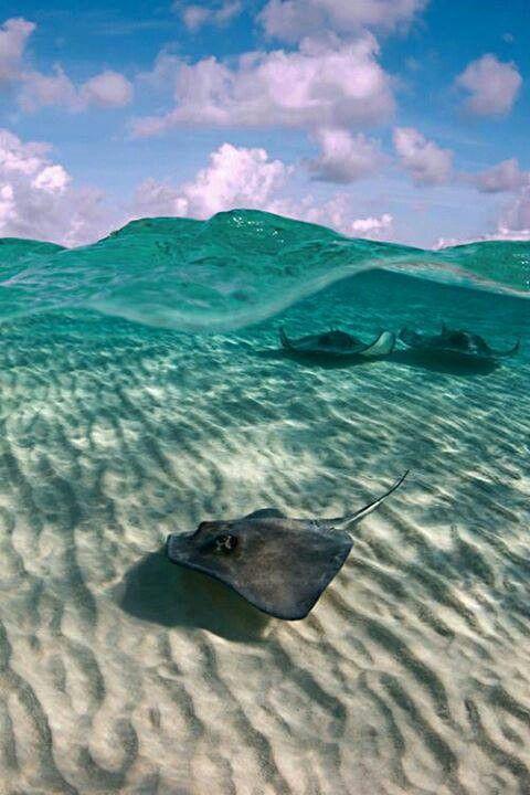 Beneath the water