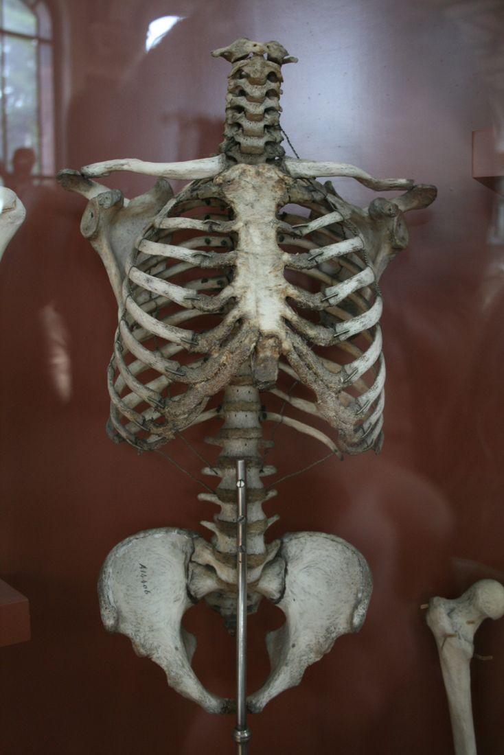 Natural History Museum Of Paris Bonesanatomy Pinterest