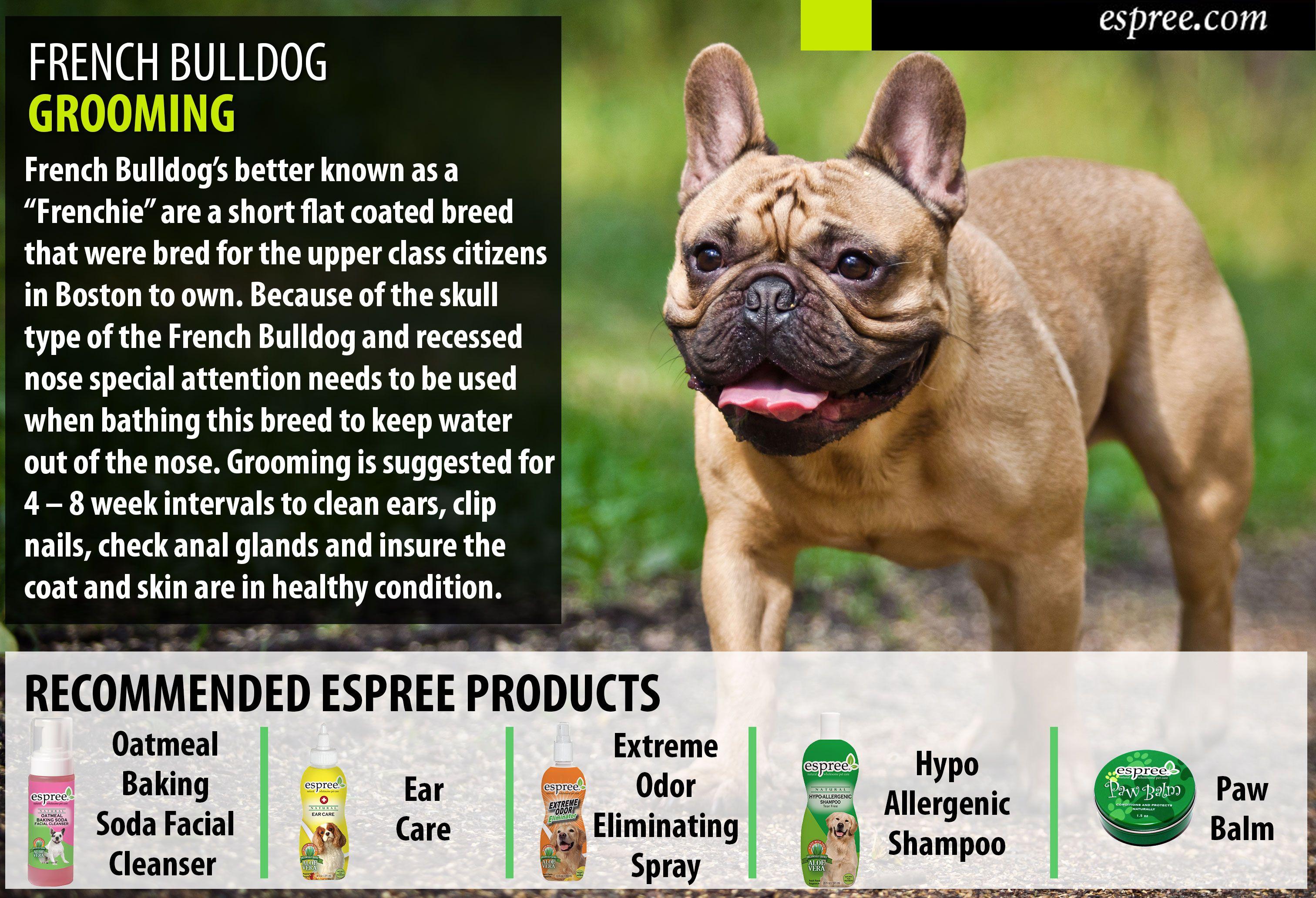 french bulldog grooming | bulldog puppies, french bulldog