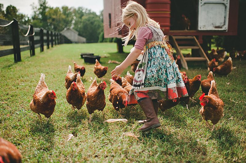 Day on the farm by deanna mccasland best lifestyle for Country farm simples
