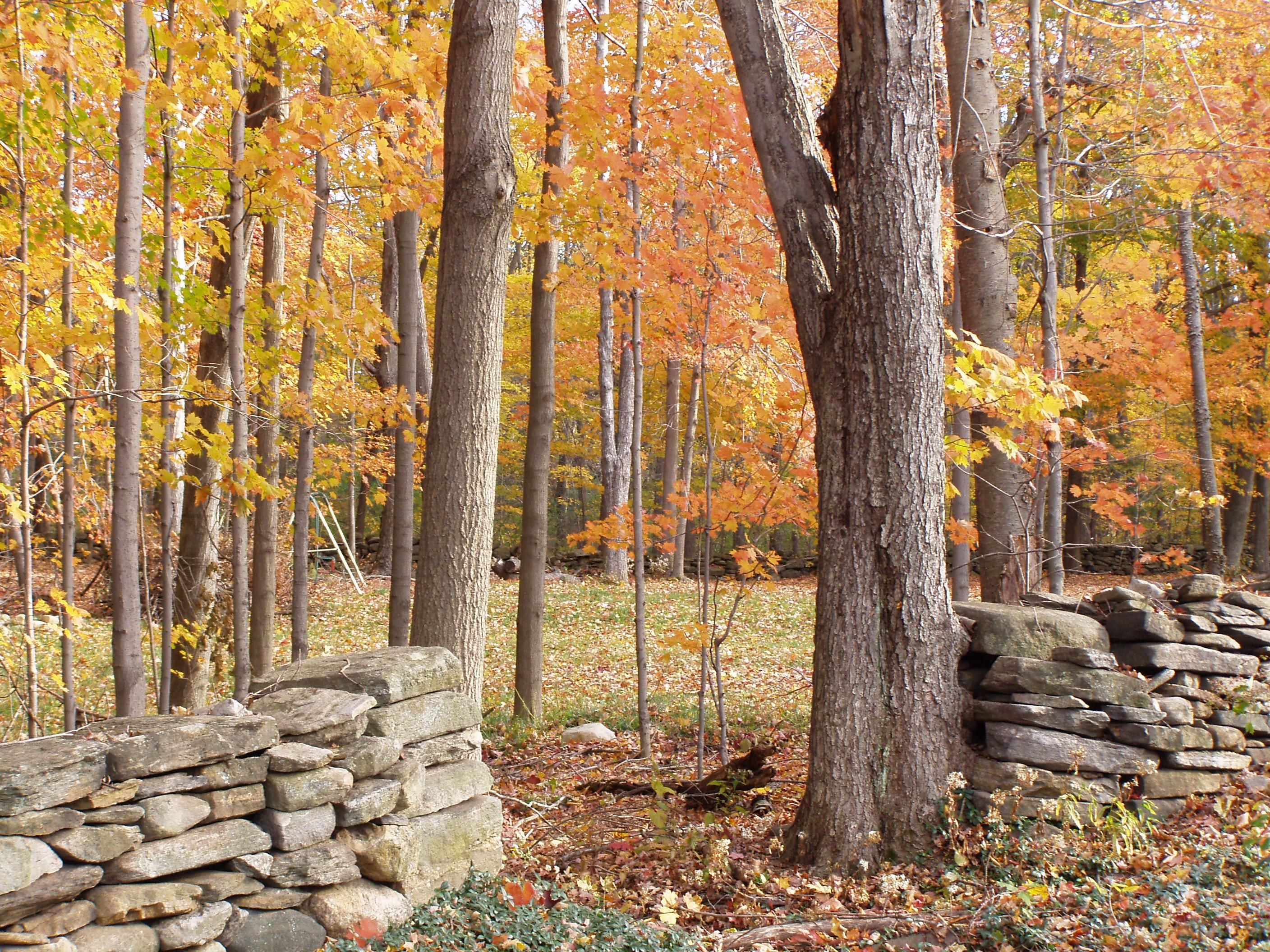 The Beauty of New England Stone Walls New england fall