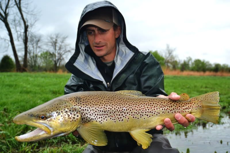GREAT DEALS ON OUR BEST STREAMER STICKS | The Ozark Fly Fisher Journal