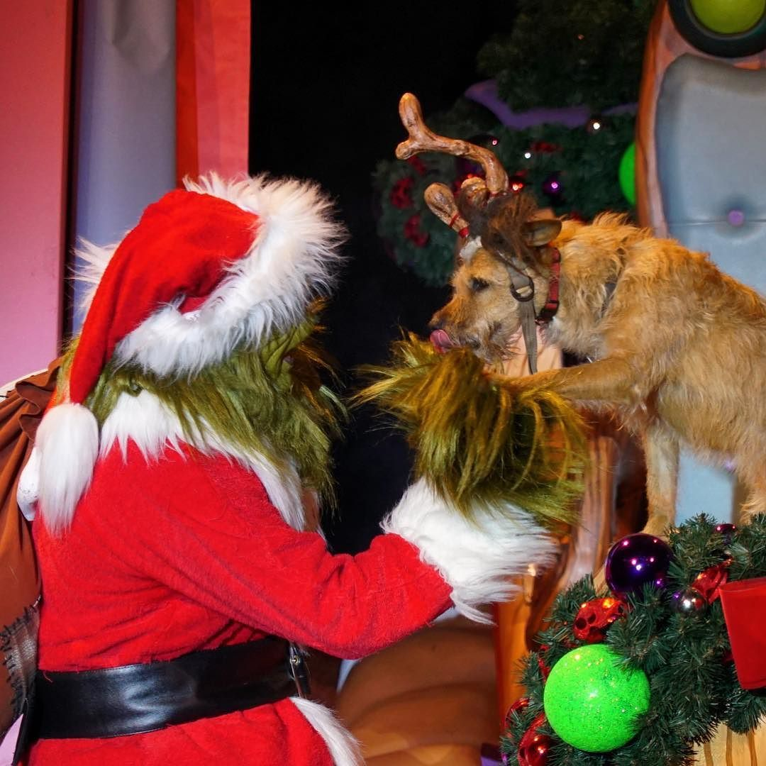 Uncategorized The Grinch And His Dog the grinch and his dog max during how stole christmas at universals