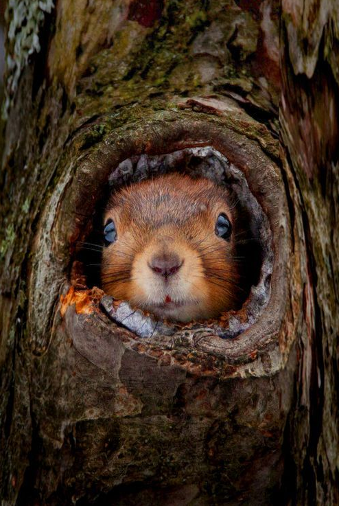 You're myyyyy brown eyed squirrel...do you remember when we used to sing sha la la la la la la la la la la te da