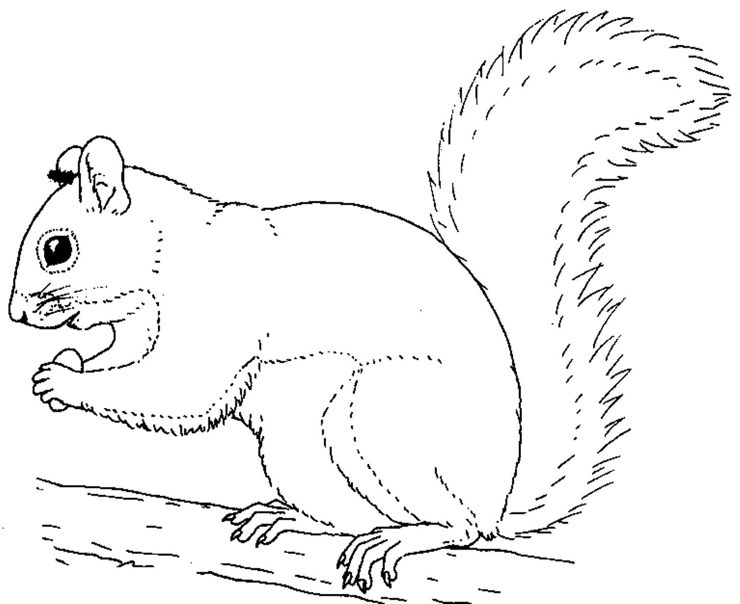 Printable squirrel coloring pages coloring me for Coloring page of a squirrel