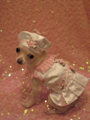 White And Pink Harness Set Dog Dress Dog Clothes Ebay Dog Clothes Patterns Pet Clothes Puppy Clothes