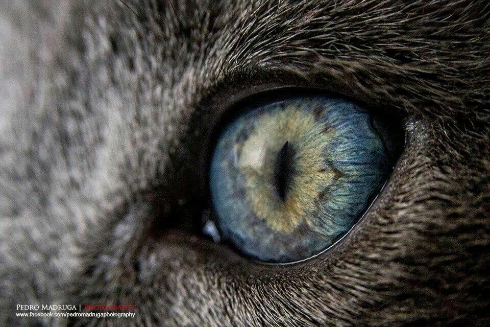 Pin by Bertha Gomar Goria on love it | Pinterest | Eye