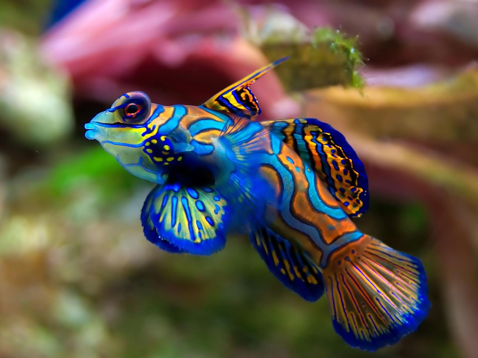Tropical Fish  Google Search