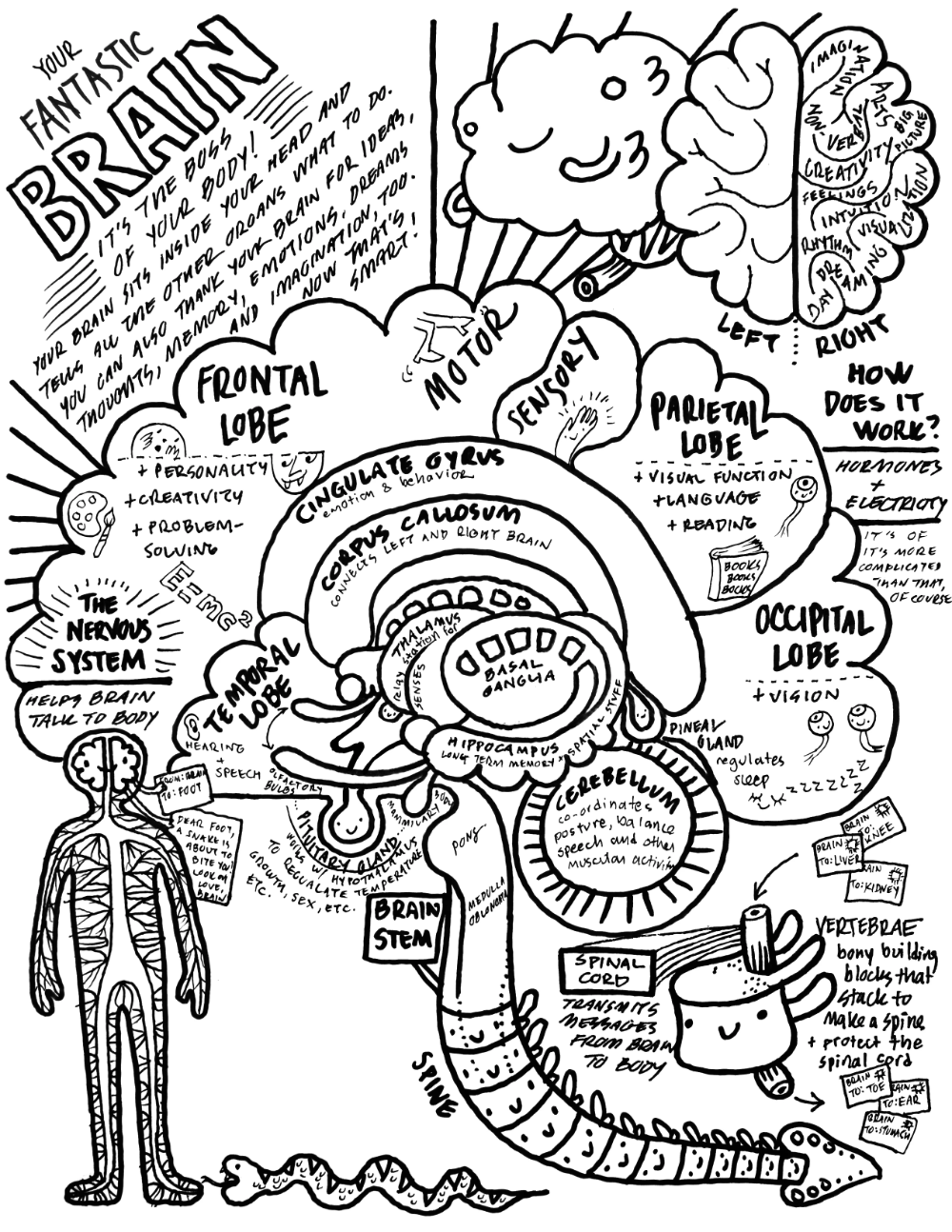 Free Stuff I Heart Guts Teaching Biology Anatomy Coloring Book Brain Anatomy [ 1294 x 1000 Pixel ]
