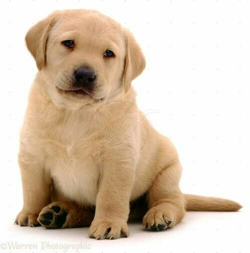 Top Chub Chubby Adorable Dog - 6bf7a25e47153d83cf6158b8546859d8  Pictures_696747  .jpg