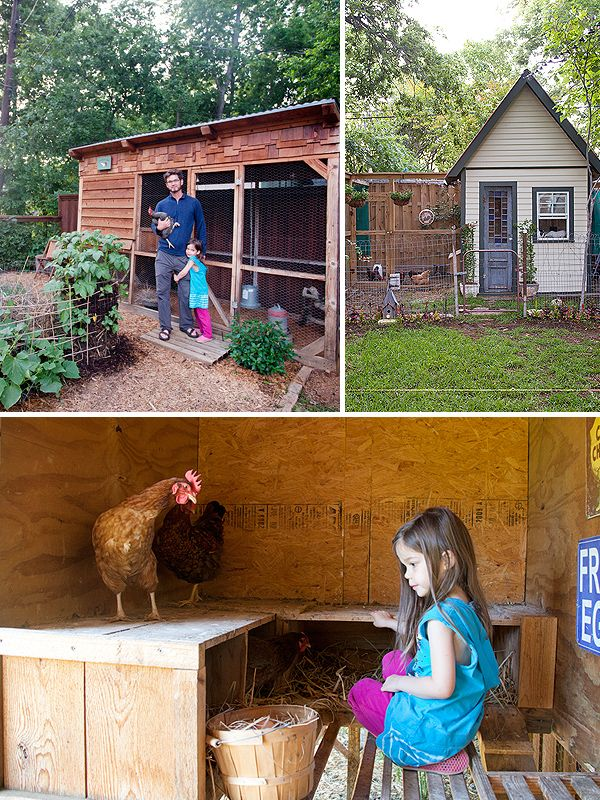 D Magazine : Backyard Chickens @LeanneConway