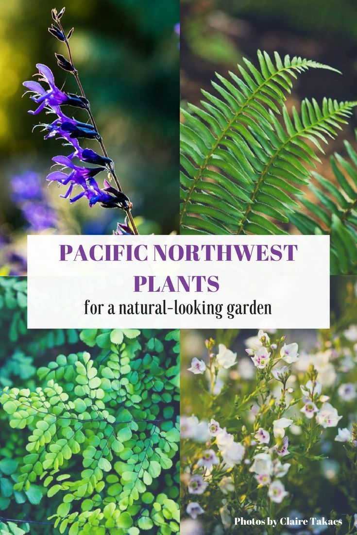 Plants for Pacific Northwest Gardens. Photos by Claire Takacs.