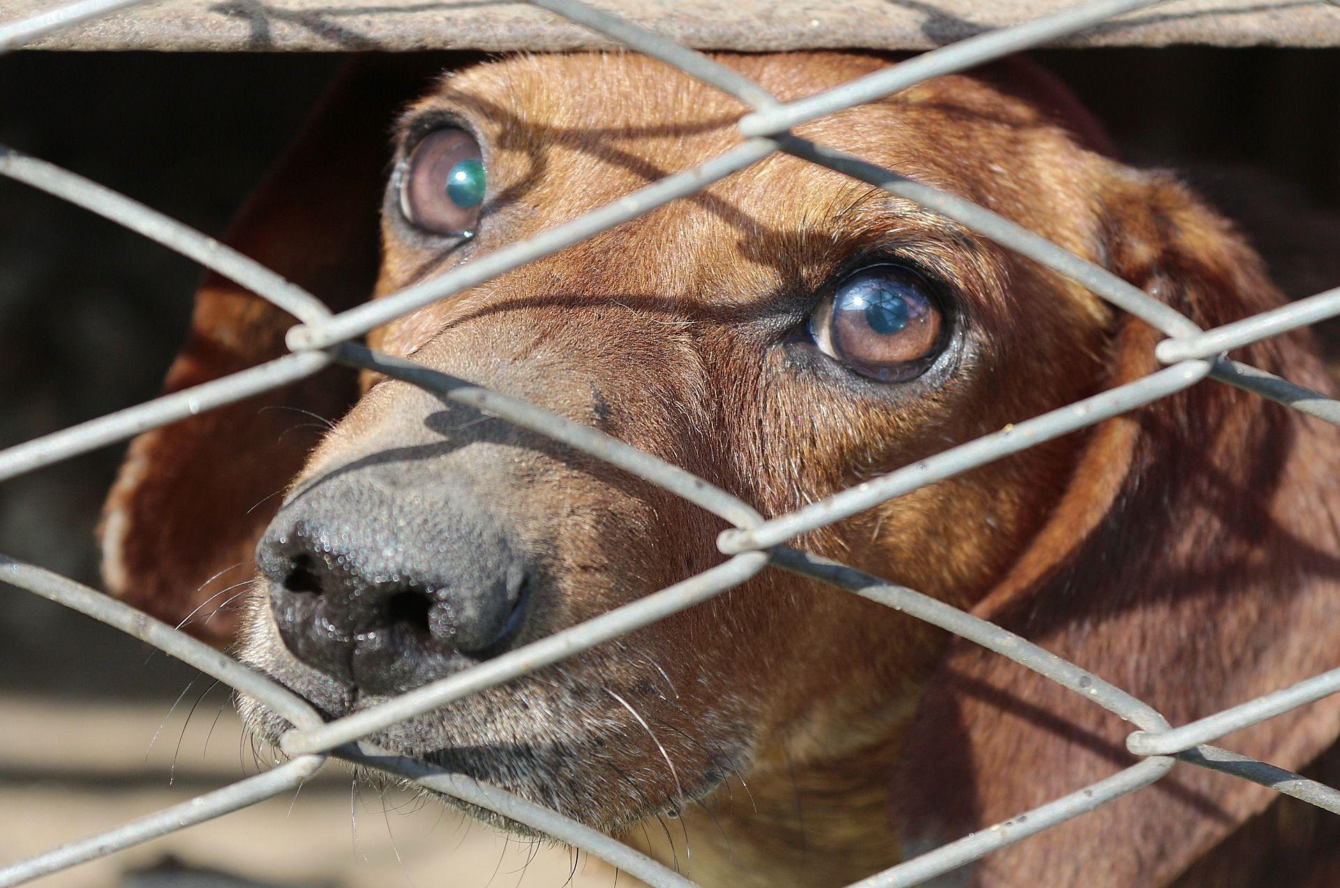 Hundezwinger Onlineshop 30 Jetzt Gunstig Kaufen Mit Bildern Hundezwinger Tierheim Hunde