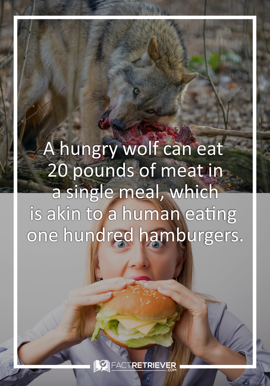 """Scientists study the diet of wolves by examining their """"scats,"""" or their  waste products"""