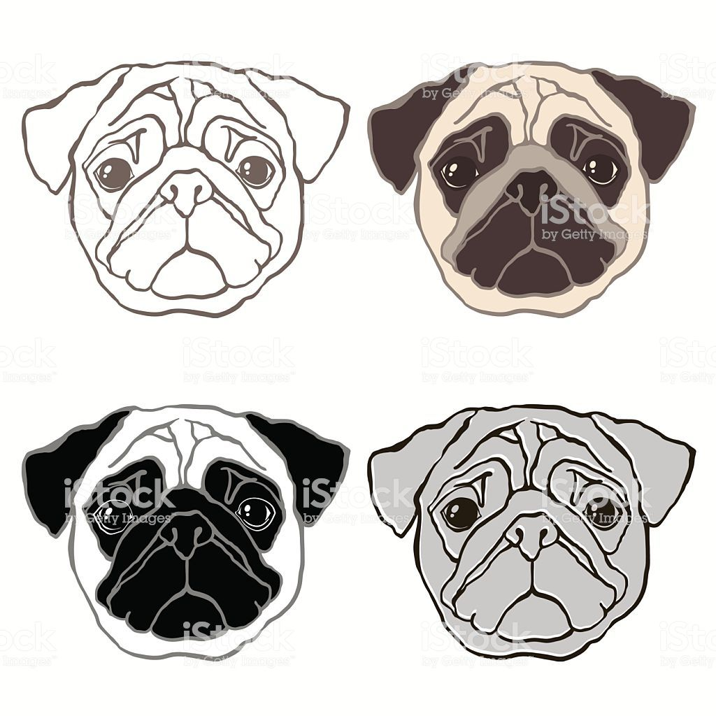Vector Set Of Pug S Face Can Be An Element Your Design Pug Art