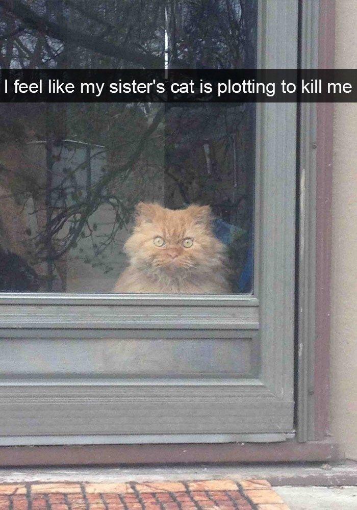 36 Cute AF Animal Snaps That'll Melt Even The Manliest Of Men - Memebase - Funny Memes