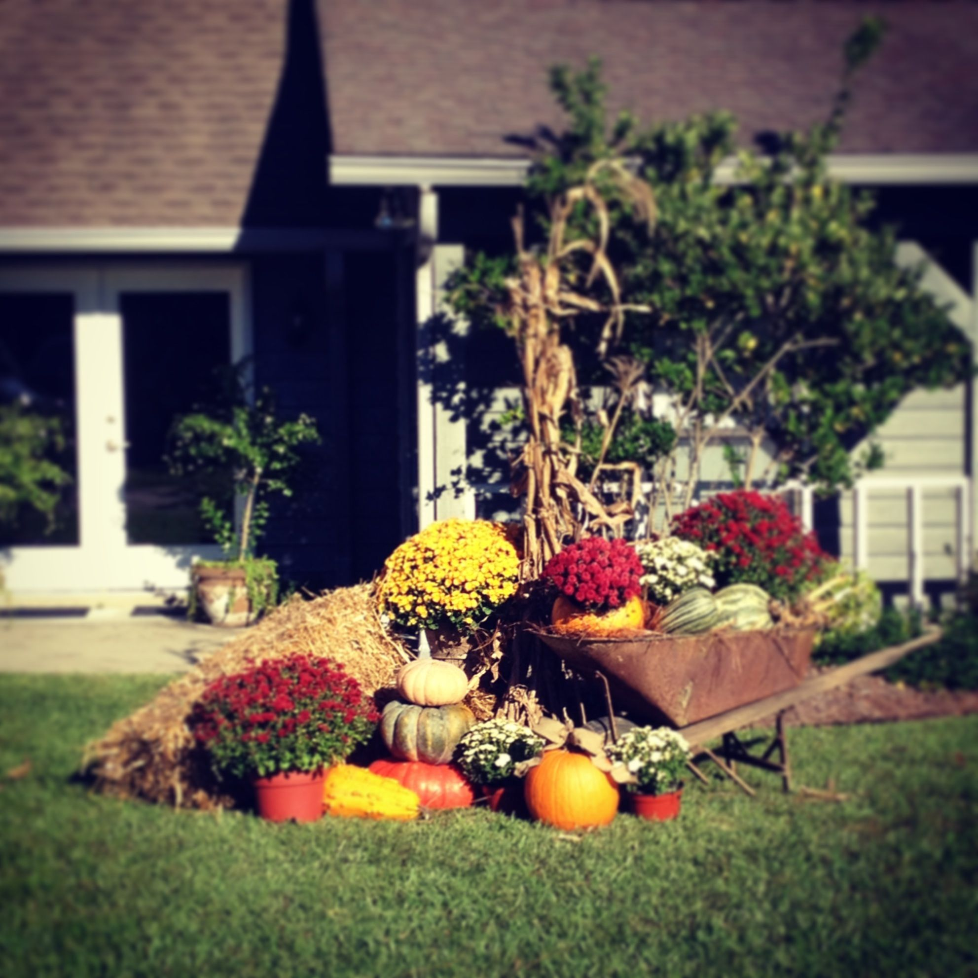 Decoration Adorable Front Gardens Designs Engaging Front: Fall Yard Decorations