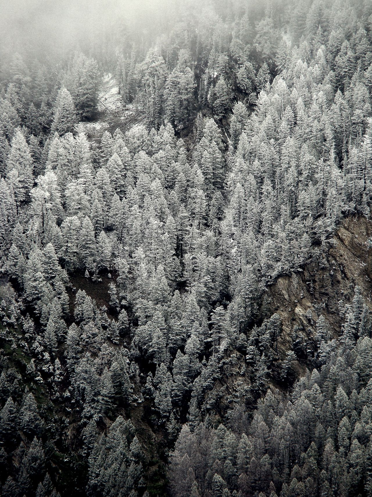 snow covered trees via inspiration station