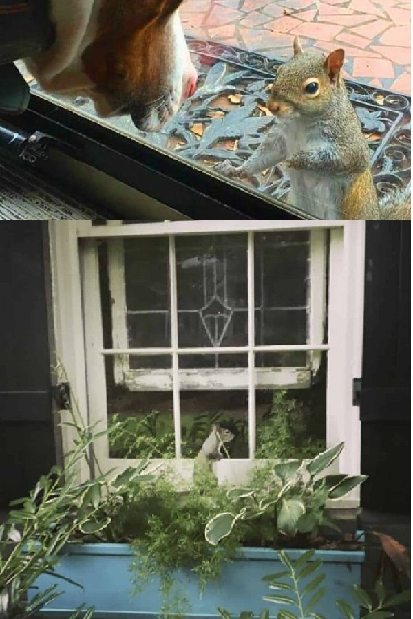 Squirrel Taps Window Every Day  8 Years On The Family Realises What Shes Desperate To Show Them