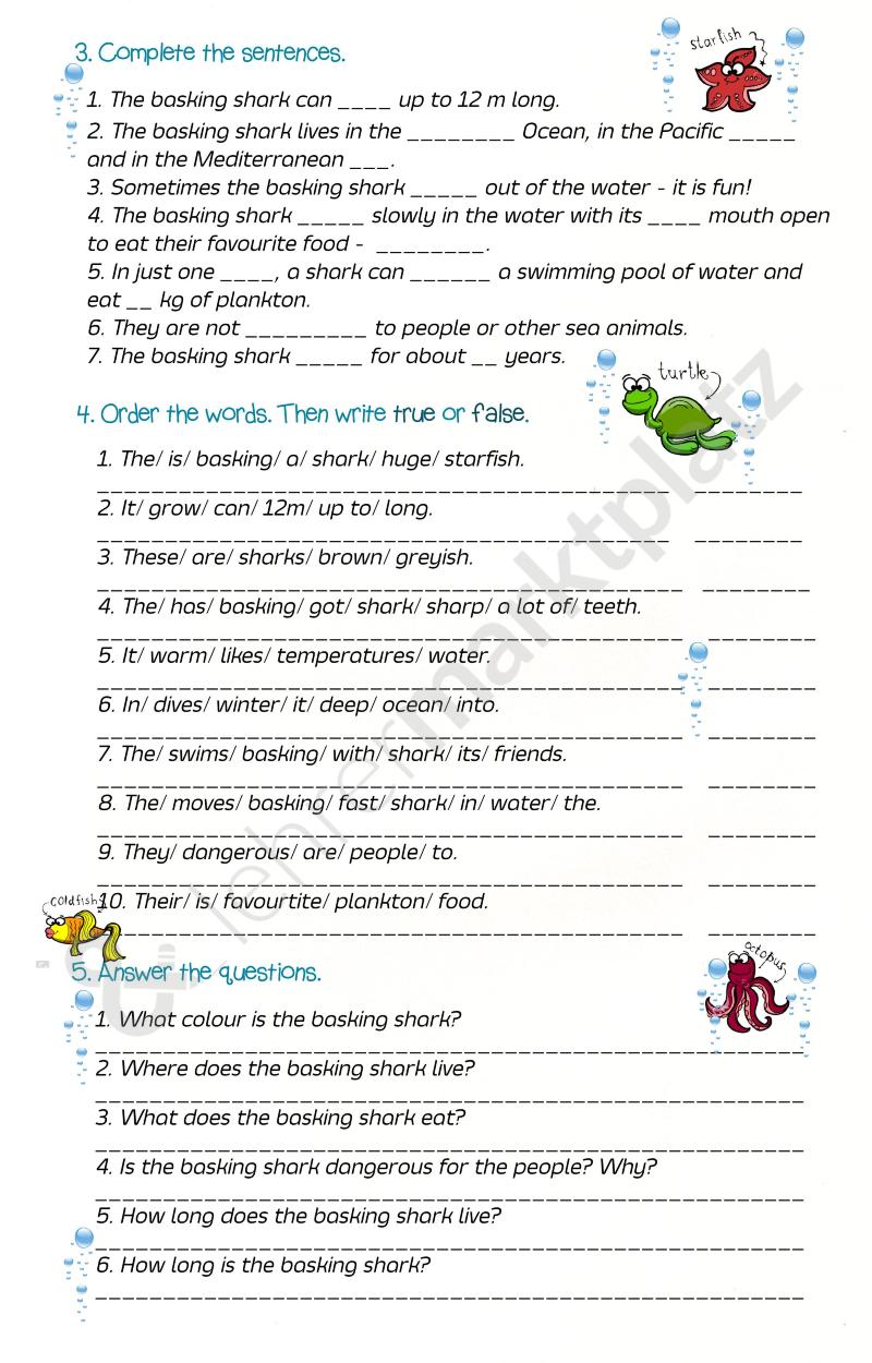 Under the Water - The Basking Shark – Biologie, Englisch | Pinterest ...