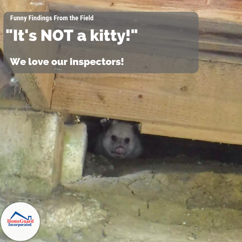 Stop, Don't Pet It! FunnyFindings RealEstate Opossum