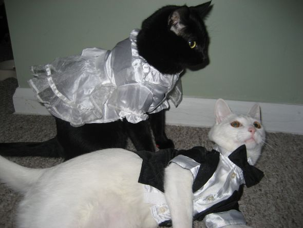 Black and white cats dressed like bride and groom he he our black black and white cats dressed like bride and groom he he our black shadow junglespirit Gallery