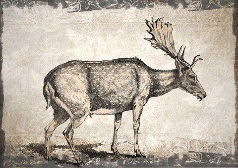 Deer, Nature, Animal, Wild